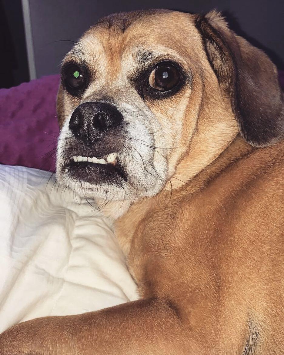 Meet Toby
