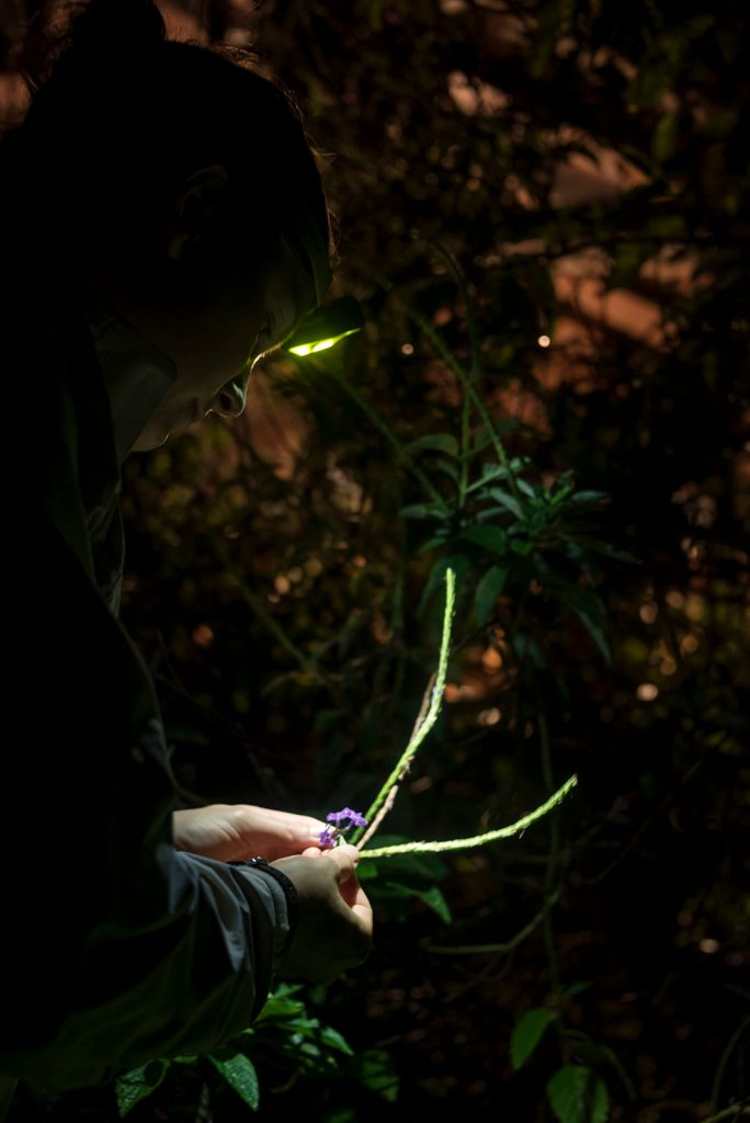 examining plants in the dark