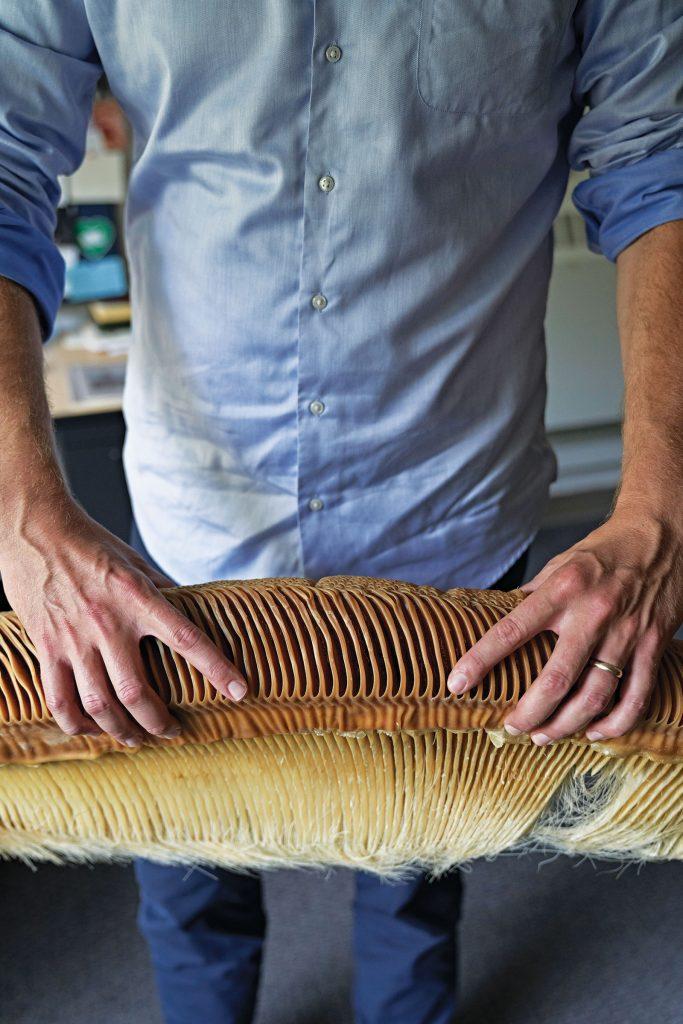 hands holding whale bones