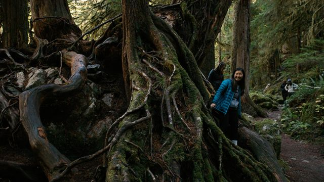 SPU Outdoor Recreation Program students climb over giant tree roots